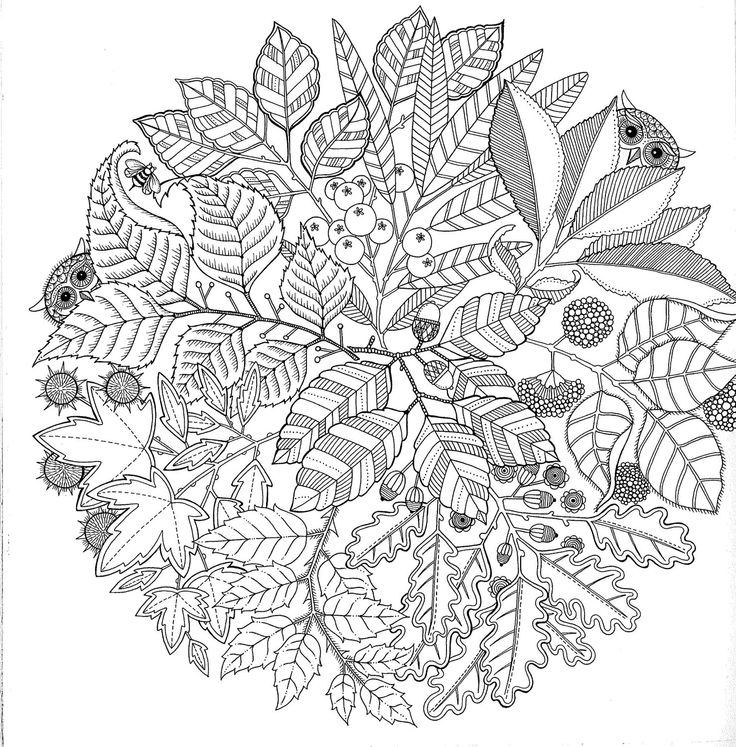 Anti Stress Colouring Book - Available Online Or In Store - From BIMBO  Adelaide
